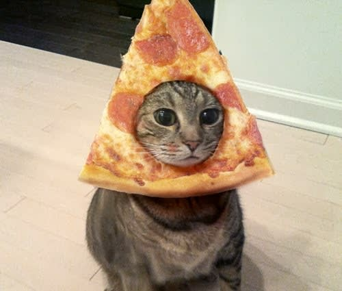 Cat wearing a pizza