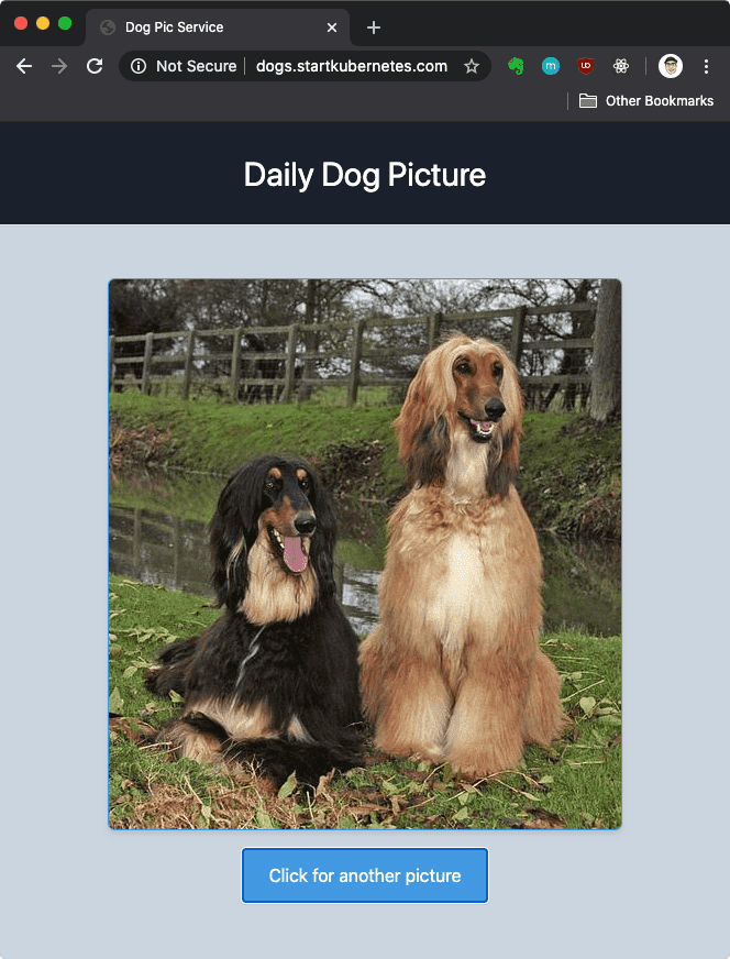 dogpic website