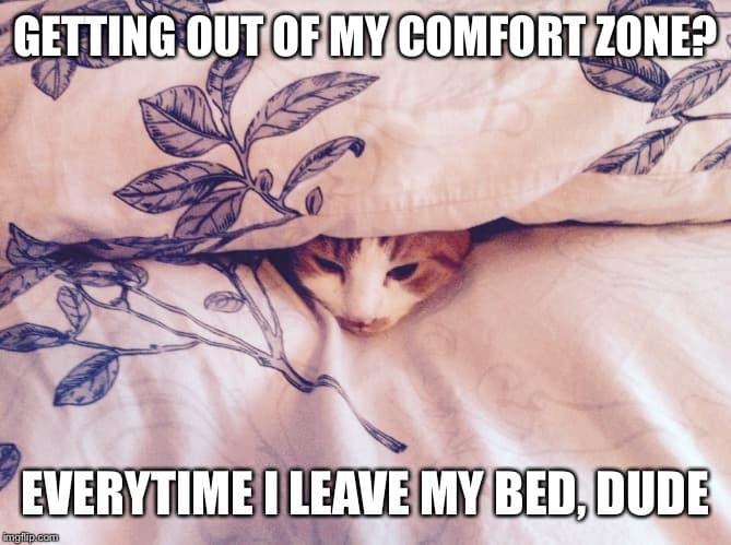 comfort zone cat