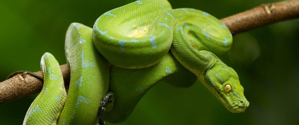 Cover image for Python File Basics