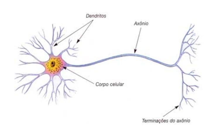 Figura 1 - Esquema de um neurônio biológico típico