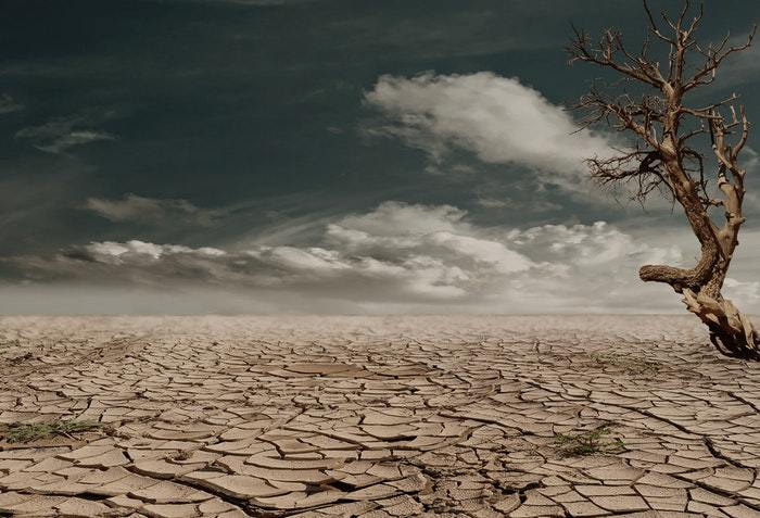 Dusty desert with cracked earth and a barren tree