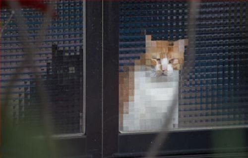Eight-bit cat