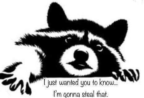 """""""Racoon saying I want you to know I'm stealing that"""""""