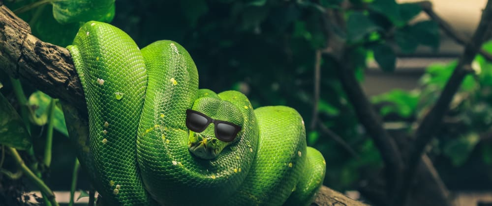 Cover image for Back to Basics: More Strings in Python