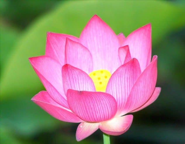 Copyright Juv Chan's Flower