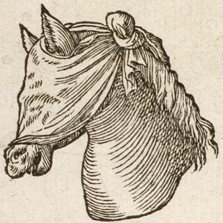 plaoo profile