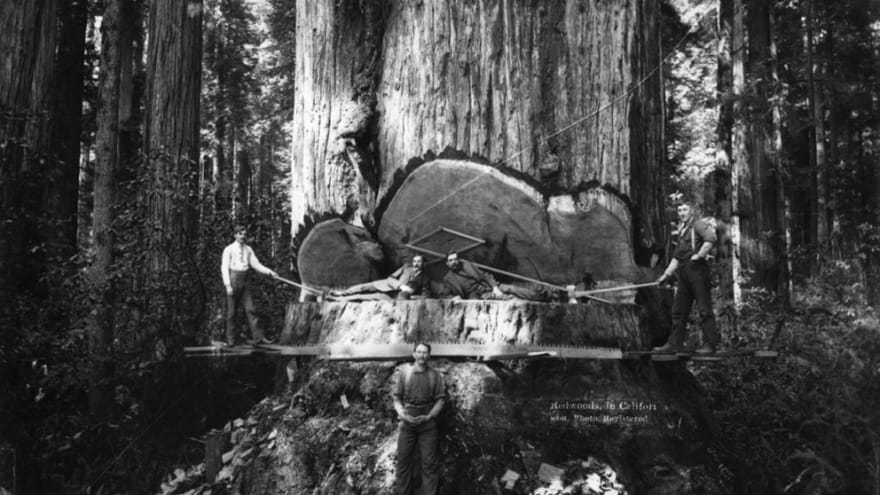 Logging lumberhack 03