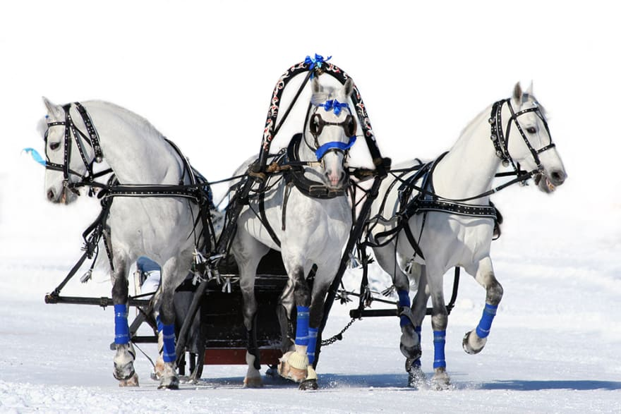 Three horses pulling a cart. A Troika in Russian