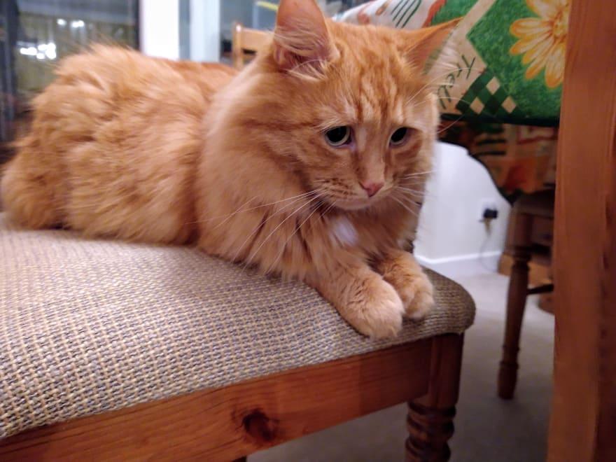 Ginger cat looking he has sad eyes