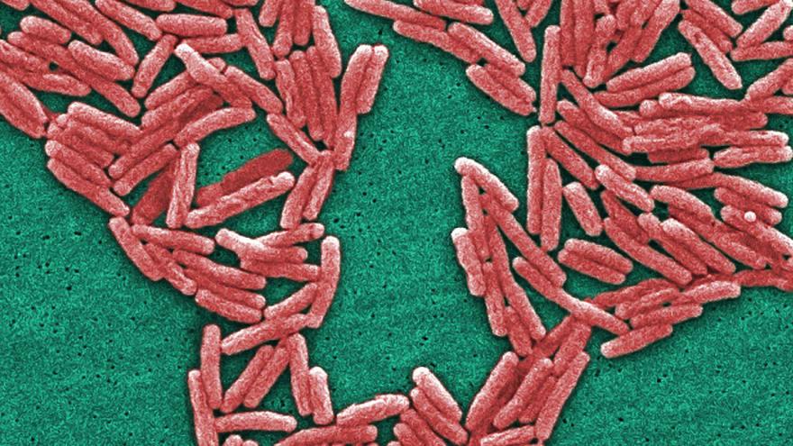 Disease outbreak database