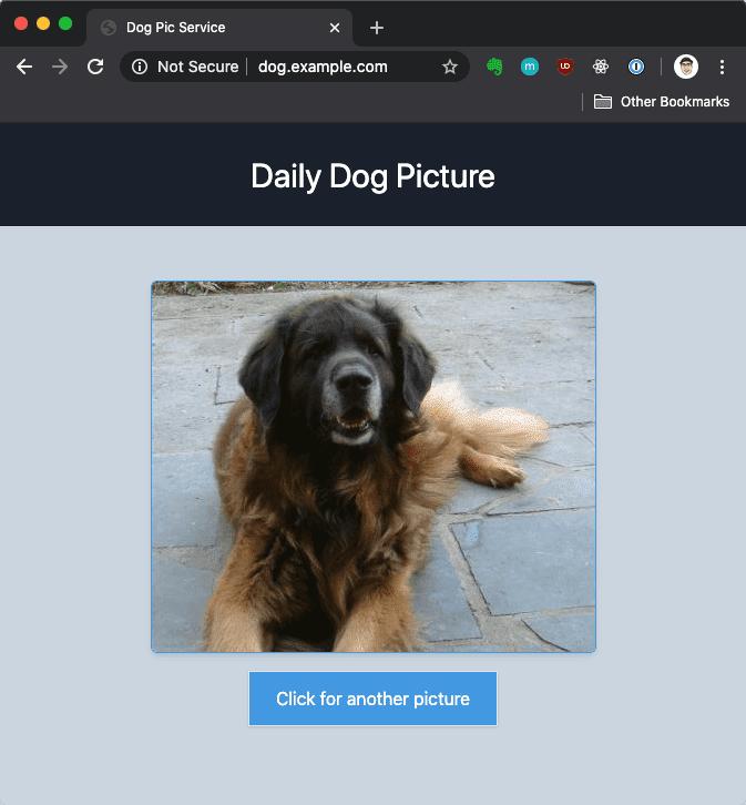 Dog Pic Website