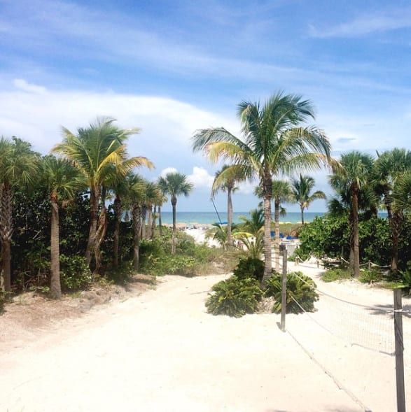 palm trees and sandy beach in Florida