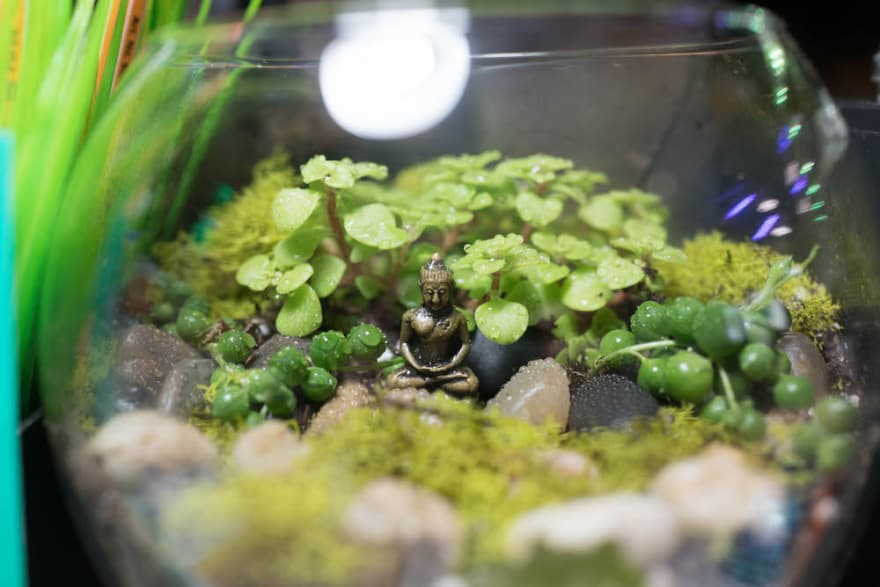 A serene picture of a buddha statuette in a terrarium on my desk at work