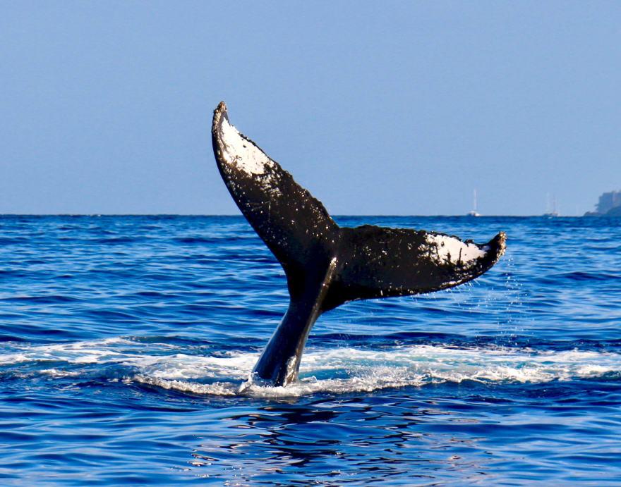 Docker Whale