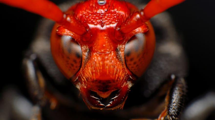 Craft Cms Debug Toolbar Solent Bugs