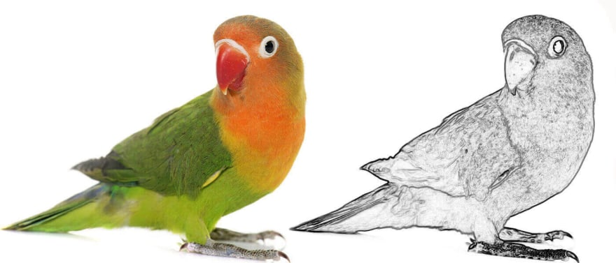 photo of a lovebird alongside an edge-detected version