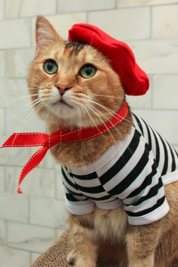 French-speaking cat