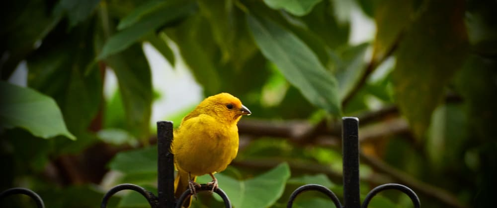 Cover image for Creating resilient API synthetic canary tests using CloudWatch Synthetics