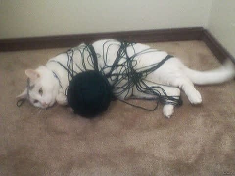 cat being trapped