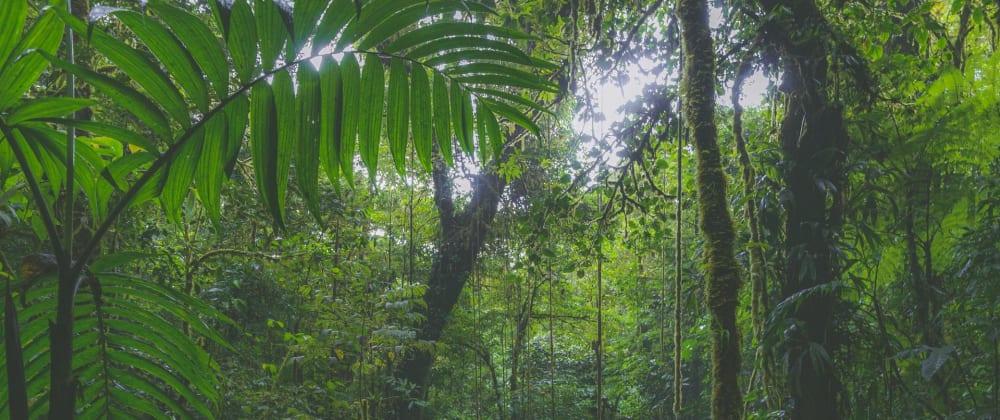 Cover image for JungleJS + Storybook + TailwindCSS starter