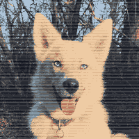 dog image reduced to 12 colors and dithered