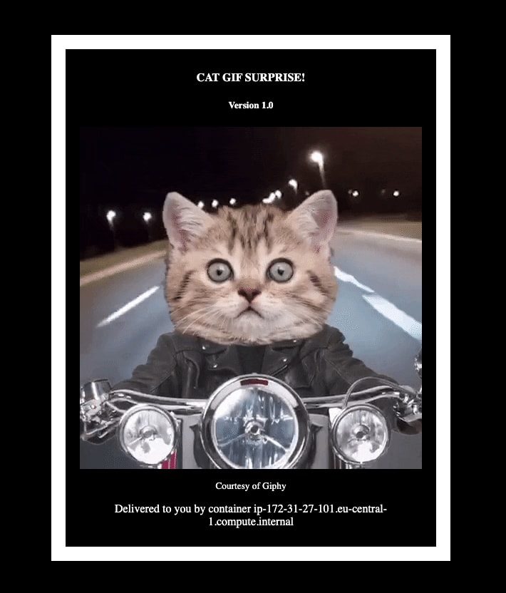 Cat GIF Demo