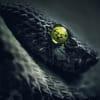 blackmamba profile image
