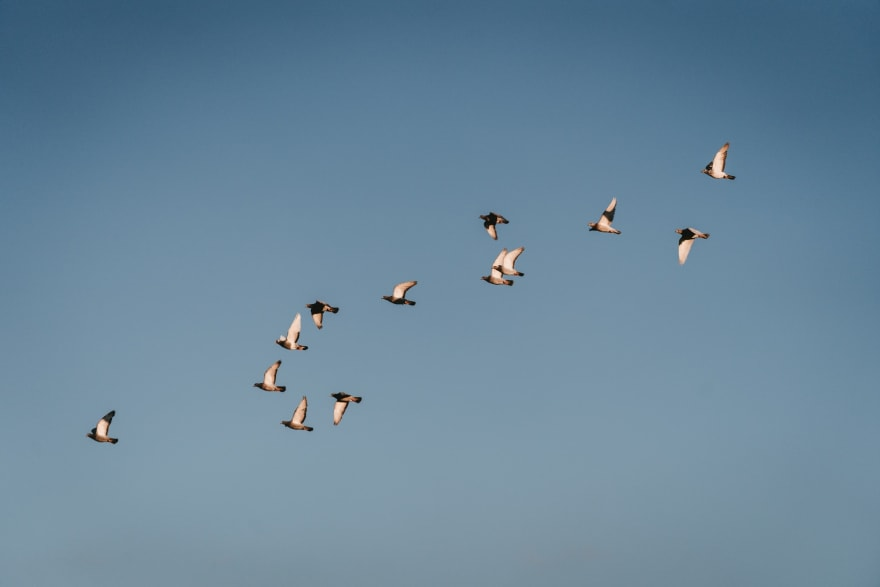Photo: Birds flying someplace else