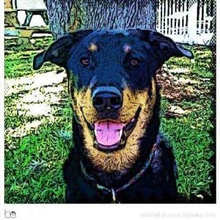 RioBrewster profile picture