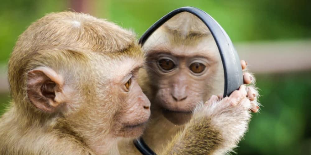 Monkey Recognition with Tensorflow Keras - DEV Community