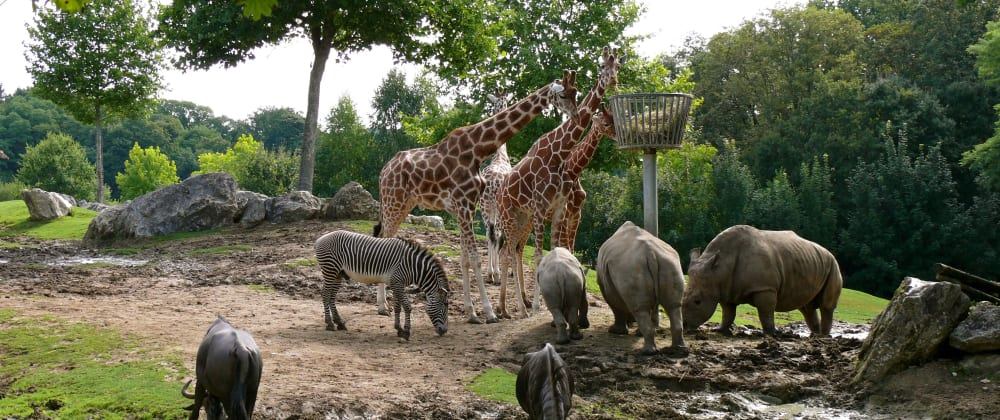 Cover image for The Compile-To-JS Zoo
