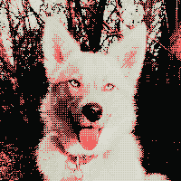 dog image dithered to match the colors of my website