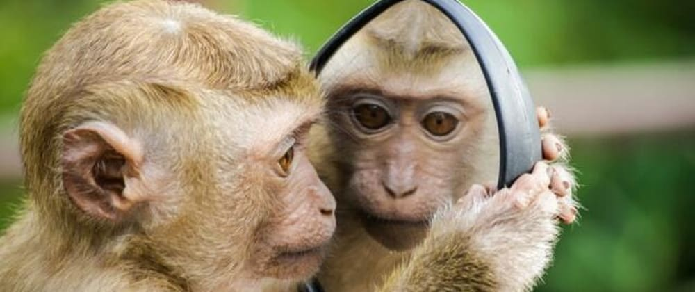 Cover image for Monkey CSS