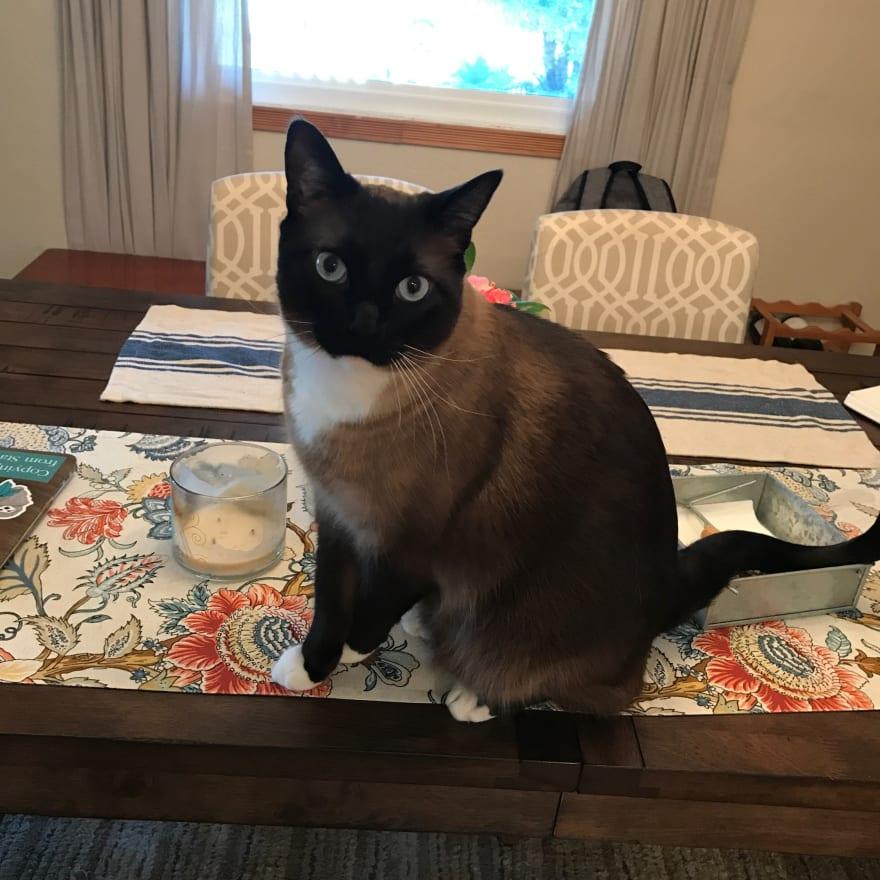 My cat, Momo.