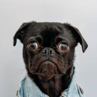 kevin_kevin profile image