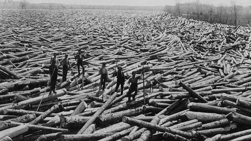 Logging lumberjack 06