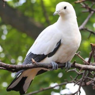 pigeontastic profile