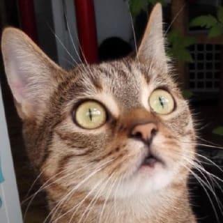 Jannis Mattheis profile picture