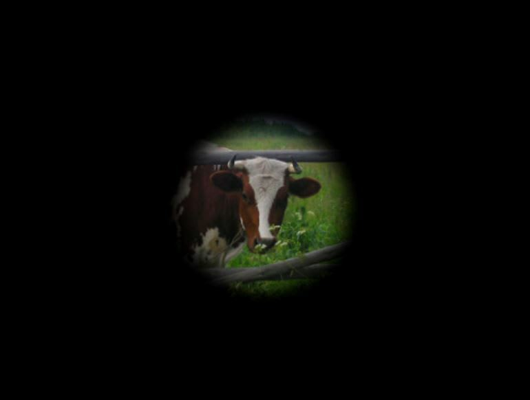 """Example of """"tunnel vision"""" where only a tiny portion of a cow is visible and the rest of the image is black"""