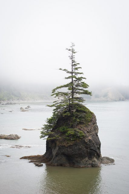 a lonely tree on a rock