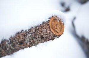 broken piece of wood in snow