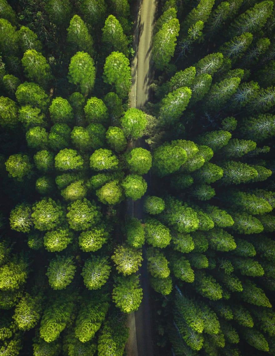 trees on drone footage