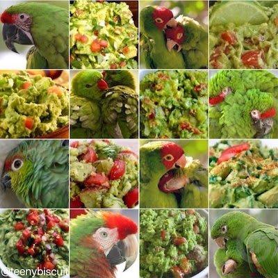 parrot vs. guacamole