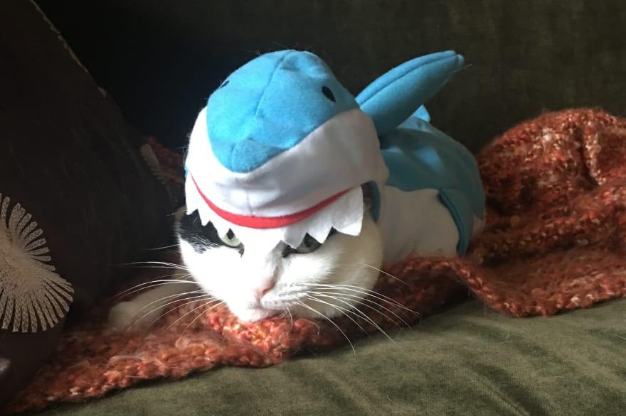 cat in a costume