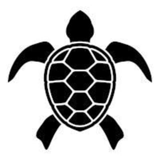 Typing Turtle profile picture