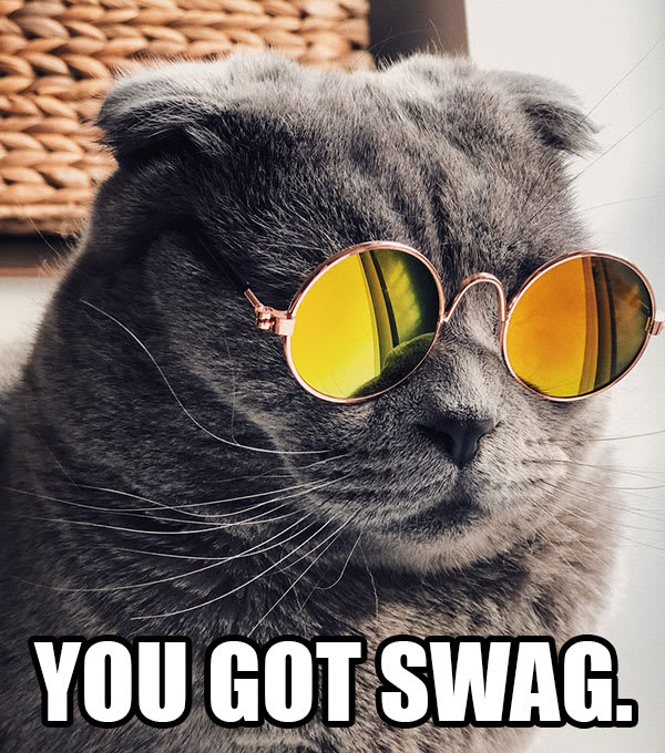 """funny cat with sunglasses and """"You got swag"""" text"""