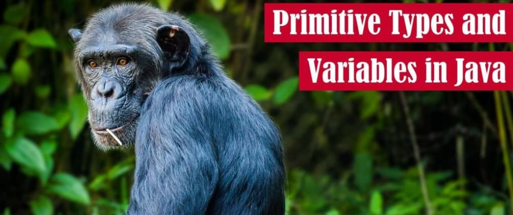 Cover image for Primitive Types and Variables in Java