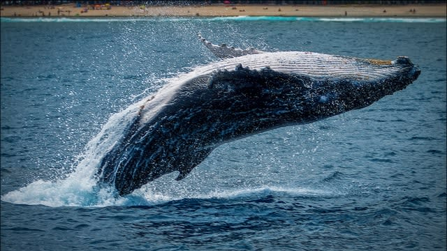 image of whale coming out of the water