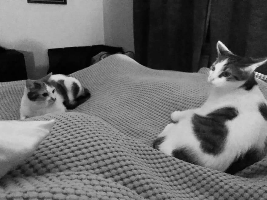 Griet's 2 cats